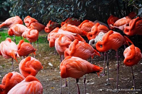 фламинго3